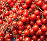 National Gardens Large Cherry Tomato Seeds (Pack of 30)