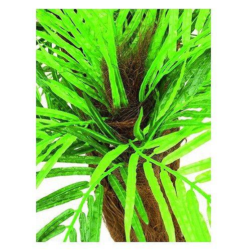 Euro Palms 82509404 Areca Palme mit Baststamm, 120 cm