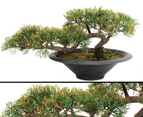 Indoor Bonsai Ceder, Kunstbonsai mit strukturiertem Kunststamm und 160 Blätter, in Bonsaischale, Höhe 40cm - künstliche Pflanzen