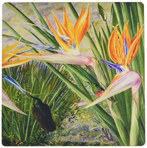 3drose LLC 20,3x 20,3x 0,6cm Viktorianischer Englisch Botaniker Malerei von Afrika Bird of Paradise Flower Maus Pad (MP _ 128800_ - Viktorianische Malerei