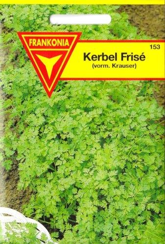 Kerbel, Anthriscus cerefolium, ca. 200 Samen