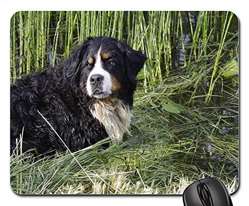 Gaming-Mauspads, Mauspad, Berner Sennenhund Hund Tier Sommer Berner