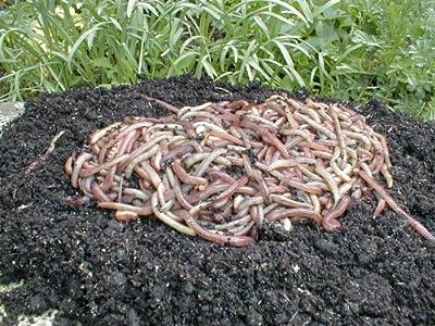 Kompostwürmer, Gartenwürmer, Regenwürmer - 0,5 Kg von SUPERWURM - Du und dein Garten
