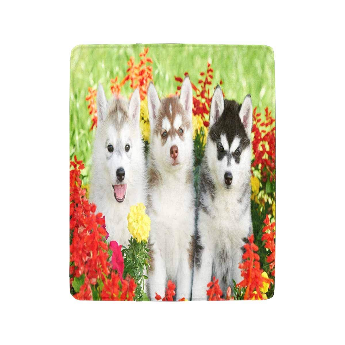 Mesllings Siberian Husky Puppy Dogs One Month Old on Green Grass Lightweight Cozy Bed Blanket fit Couch Sofa Suitable for All Season 40 x 50 Inches