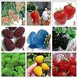 graines de légumes et de graines de fruits fraise 10000 pièces graines de chacune des graines de couleur grain Bonsai plantes Semences pour la maison et le jardin