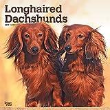 Longhaired Dachshunds - Langhaardackel 2019 - 18-Monatskalender mit freier DogDays-App (Wall-Kalender)