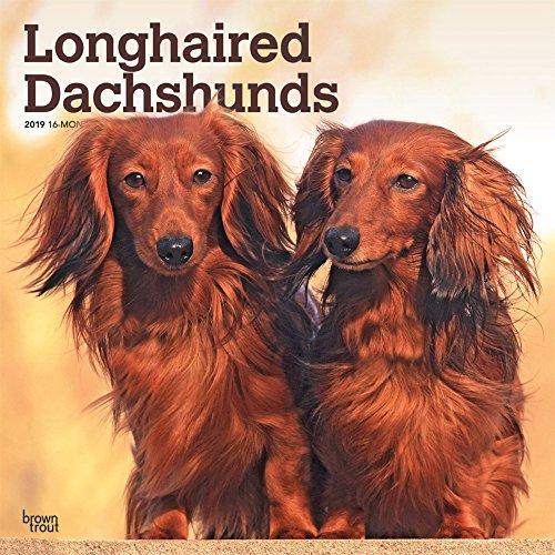 Longhaired Dachshunds - Langhaardackel 2019 - 18-Monatskalender mit freier DogDays-App: Original BrownTrout-Kalender [Mehrsprachig] [Kalender] por Browntrout Publishers