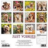 Image de Just Yorkies 2017 Calendar