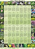 Bach Blüten Wandkarte (Amazon.de)
