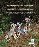 Bildband Wölfe - Begegnungen in freier Wildbahn: Deutschlands wilde Wölfe kehren zurück - Ein einmaliges Erlebnis von Wildnis und Natur mit 190 außergewöhnlichen Fotos - Axel Gomille