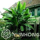 Pinkdose 100 / bag Bananenbaum Bonsai Obst Pflanze Seltene Kleine Mini Hainan Chinese Banana Pflanze Musa Dwarf Basjoo Außen Garden * Pflanzen