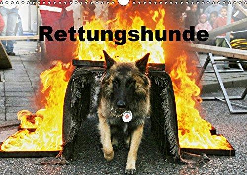 Rettungshunde (Wandkalender 2019 DIN A3 quer): Rettungshunde bei der Arbeit (Monatskalender, 14 Seiten ) (CALVENDO Tiere)