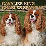 Cavalier King Charles Spaniels 2019 Square Wall Calendar