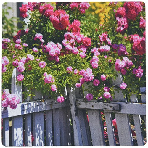 3drose-llc-8-x-8-x-025-inches-beautiful-garden-of-roses-with-a-white-picket-fence-flowers-mouse-pad-