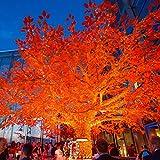 160er LED Lichterkette orange koppelbar Innen Außen Transparentes Kabel 16m Typ CC