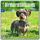 61NuXYLlplL. SL160  - NO.1# LONG HAIRED DACHSHUNDS INFORMATION GUIDE