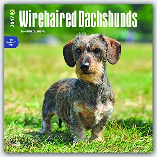 61NuXYLlplL - NO.1# LONG HAIRED DACHSHUNDS INFORMATION GUIDE