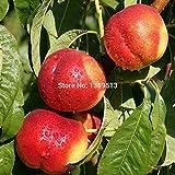 GEOPONICS Semence Nectarine Pêche Graines de fruits frais Graines - Prunus persica Sweet Honey Graines Arbre d'achat...