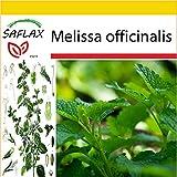 SAFLAX - Anzucht Set - Heilpflanzen - Zitronen - Melisse - 150 Samen - Melissa officinalis
