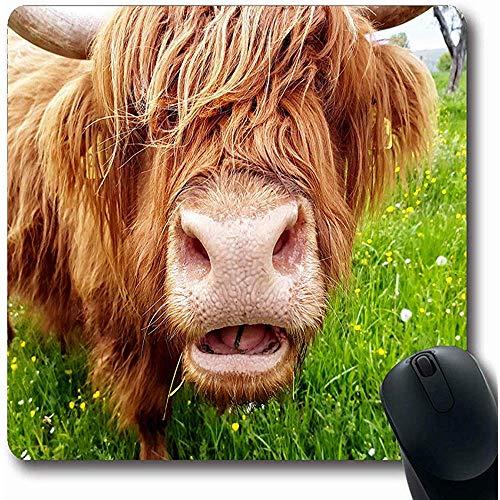 Spielmatte Long Brown Cattle Close Gras Kauen Highland Cow On Wildlife Green Schottland Nase Funny Scottish Gaming Mousepads Computer Rutschfeste Mausunterlage 25X30cm -