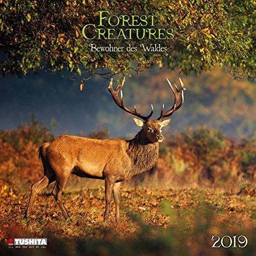 Forest Creatures 2019 What a Wonderful World: Bewohner des Waldes