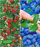 BALDUR-Garten Beeren-Kollektion,4 Pflanzen