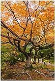 Wallario Garten-Poster Outdoor-Poster, Gelber Ahornbaum im Herbst in Japan in Premiumqualität, für den Außeneinsatz geeignet