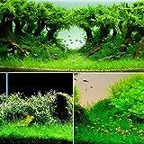 VIDOO Yani Aquatic Plant Semi Erba Semi Coperta Erba Ornamentale Paesaggistica Decorazione