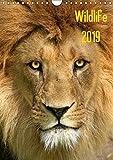 Wildlife 2019 (Wandkalender 2019 DIN A4 hoch): Wildlife-Fotografie (Monatskalender, 14 Seiten ) (CALVENDO Tiere)