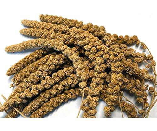 Kolbenhirse gelb 500 g Anhaltiner Premiumfutter