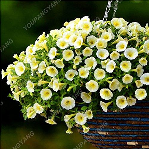 200 pcs / sac Petunia Graines Bonsaï Graines de fleurs Court Taille Jardin Fleurs Graines d'intérieur ou extérieur Plante en pot Livraison gratuite Jaune