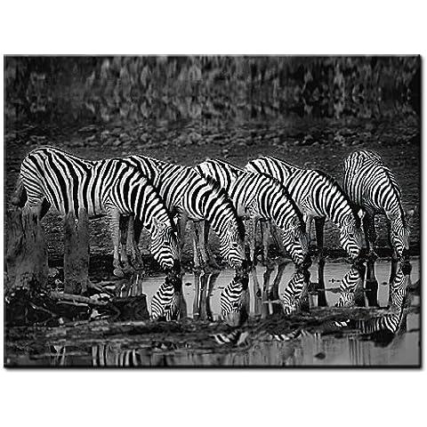 Zebra Reflection de Xavier Ortega, de cristal, plexiglás acrílico cristal único, fabricación, cebras, foto sintética, de artículo plexiglás imagen, tamaño 80cm x 60cm, Wohnen E imágenes, pared imagen, listo de colgar