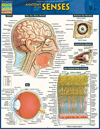 Anatomy of the Senses: Quickstudy Laminated Reference Guide (Quick Study Academic Sight)