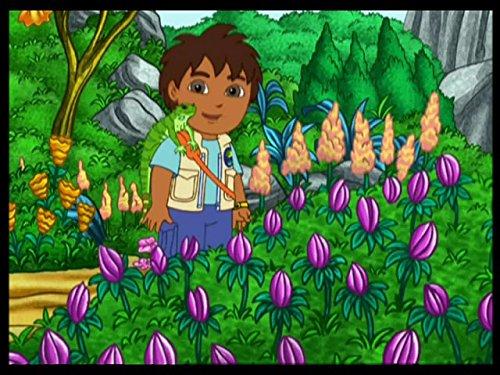 Der grüne Leguan und das Erdbeer-Fest - Jr-erdbeere