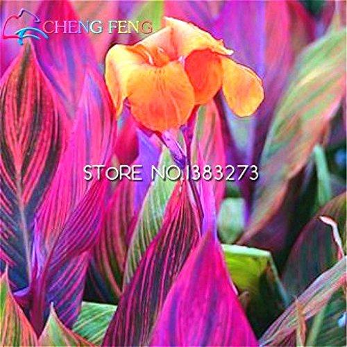 Galleria fotografica 10 pezzi Canna Semi Beautiful Flower Seed Mix Indica Lily piante da giardino Bulbi Fiori all'aperto in vaso bonsai Flores. regalo a casa