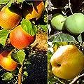 3er Set Apfelbaum mit den alten Sorten, Klarapfel, Dülmener Rosengarten, Roter Boskoop, 3 Büsche von Amazon.de Pflanzenservice - Du und dein Garten