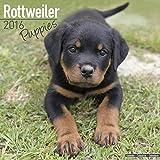 Rottweiler Puppies Calendar 2016