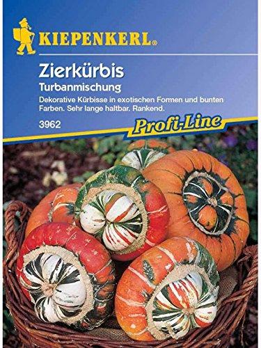 Cucurbita pepo Zierkürbis Turbanmischung