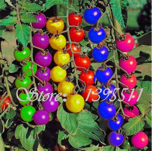 200pcs bunte Kirschtomatensamen Balkon Obst und Gemüse Saatgut Topf Bonsai Topfpflanze Tomatensamen-Mix
