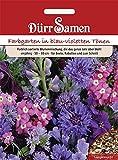 Dürr Samen - Blumenmischung Traumgarten blau-violette Töne, einjährig, 50-80cm