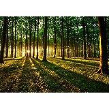 Fotomural 200x140 cm ! 3 tres colores a elegir - Papel tejido-no tejido. Fotomurales - Papel pintado 200x140 cm - bosque sol Árboles naturaleza paisajes c-B-0027-a-b