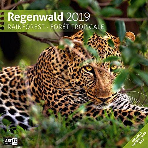 Regenwald 2019, Wandkalender / Broschürenkalender im Hochformat (aufgeklappt 30x60 cm) - Geschenk-Kalender mit Monatskalendarium zum Eintragen