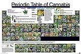 Periodic Table Of Cannabis Periodensystem der Hanfsorten (91,5cm x 61cm) + Ü-Poster