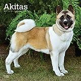 Akitas 2019 - 18-Monatskalender mit freier DogDays-App (Wall-Kalender)