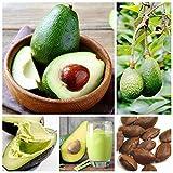 Inovey 10Pcs/Pack Semillas De Aguacate Persea Americana Mill pera Semillas Bricolaje Saludable Ensalada De Frutas