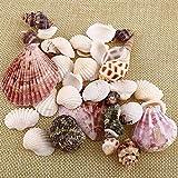 Gemini _ Mall Strandmuscheln, verschiedene Arten, natürliche Muscheln als Dekoration für Bastelprojekte, Hochzeit, Garten, Aquarium, zufällige Farben und Muster, 100g gemischt - 5
