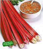 BALDUR-Garten Blut-Rhabarber, 3 Knollen Rheum rhabarbarum