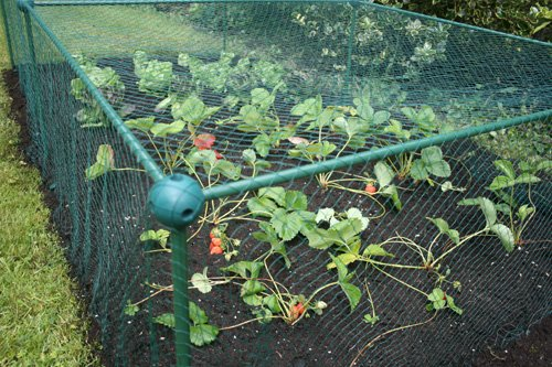 Marvelous Netted Fruit And Vegetable Cage Approx 2u0027 High   Protect Against Pests    Choice Of Sizes (1.00m X 1.00m X 0.625m High): Amazon.co.uk: Garden U0026  Outdoors