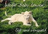 Weiße Baby Löwen - Süß und verspielt (Wandkalender 2017 DIN A3 quer): Erleben Sie faszinierende Fotoaufnahmen von seltenen weißen Babylöwen. (Monatskalender, 14 Seiten ) (CALVENDO Tiere)