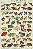 Frogs & Toads of the World Educational Poster 24 x 36in by Feenixx